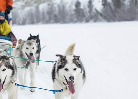 Yukon Dogsledding Adventure