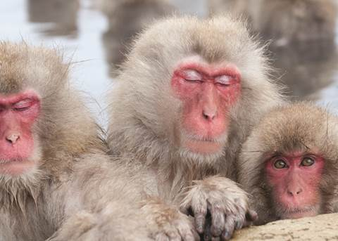 Onsen and Snow Monkeys