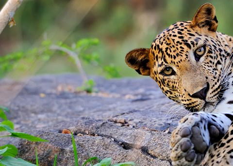 Wildlife of North India