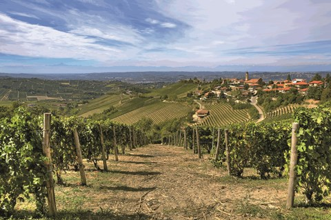 Self-Guided Walk Piedmont - Barolo to Barbaresco