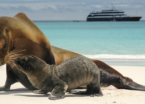 The Galapagos with Lindblad Expeditions-National Geographic