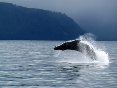 Discover the beauty of BC's Haida Gwaii