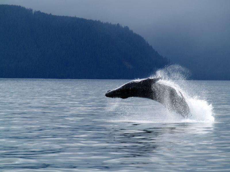 Discover the beauty of BC's Haida Gwaii