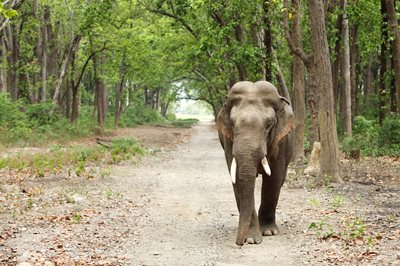 Tips to make sure your holiday is an elephant-friendly one