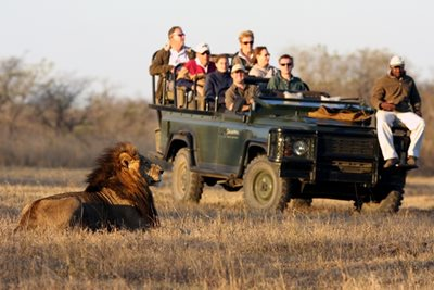 On Safari at Savanna in South Africa