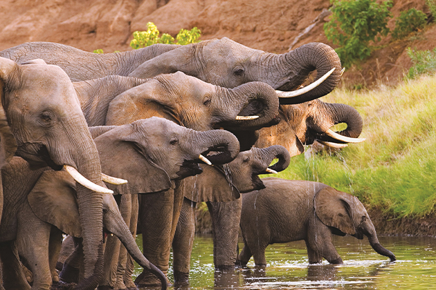 Unforgettable experiences in Africa
