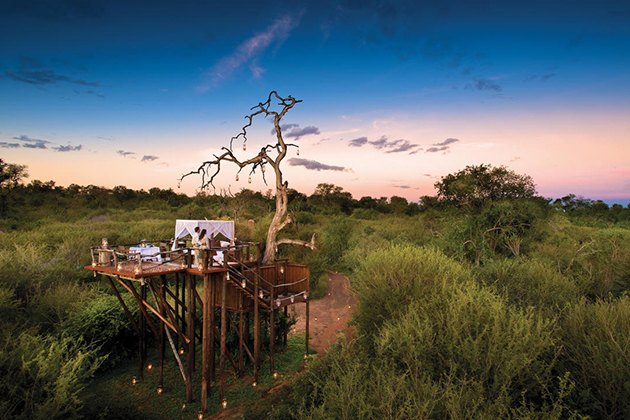 Unforgettable Treehouses in South Africa