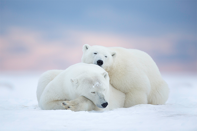 Top tips for travelling to the Arctic
