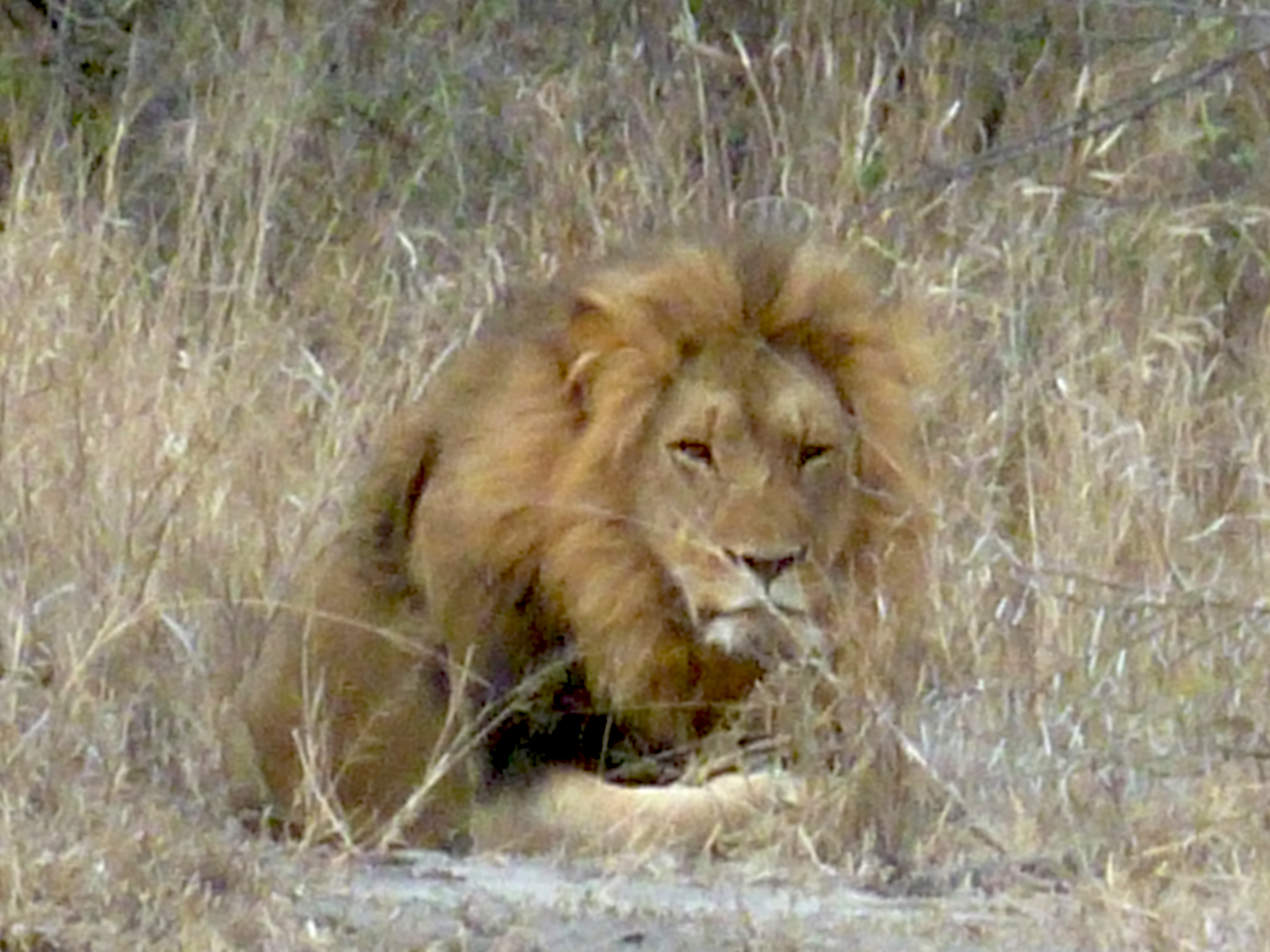 Lions, cheetahs & more at Makutsi Safari Springs